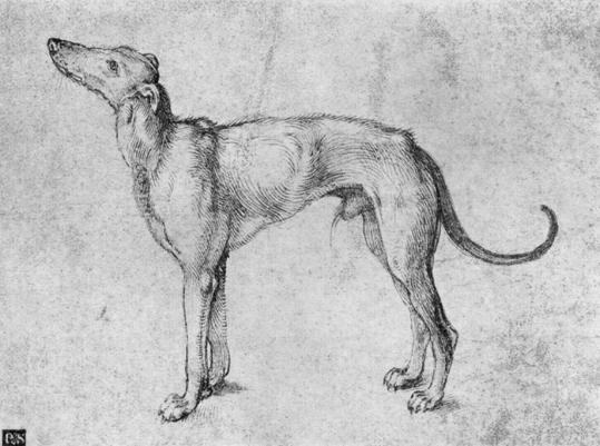 greyhound-durer3