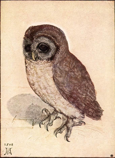 little_owl