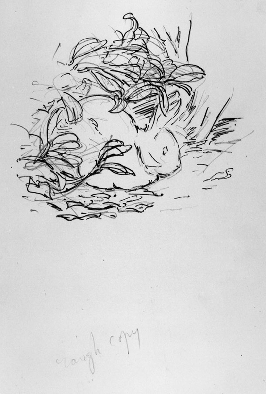Preliminary drawing for the privately printed edition of The Tale of Peter Rabbit,-1901
