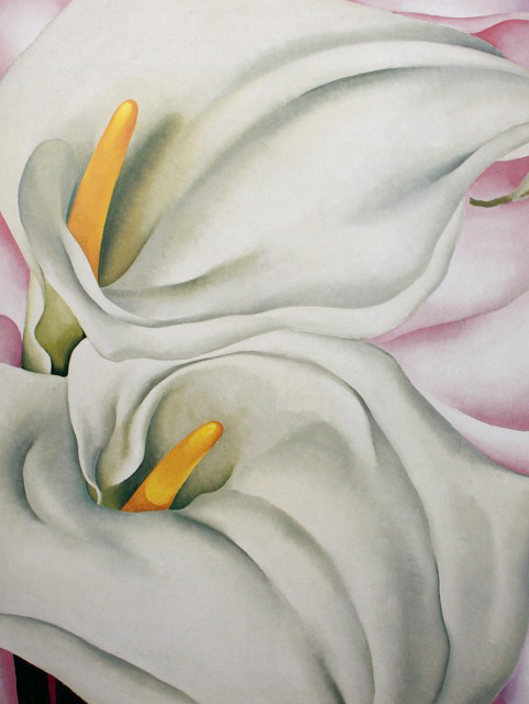 Georgia O'Keeffe, 2 CALLA LILIES ON PINK, 1928 (same year as the Poppies), oil on canvas, 40 x 30″, Philadelphia Museum of Art.
