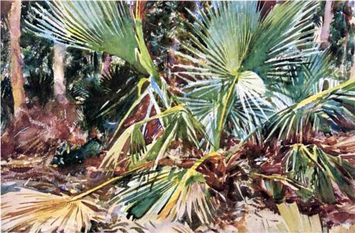 palmettos-florida
