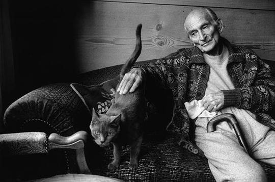 balthus cat - photo #8
