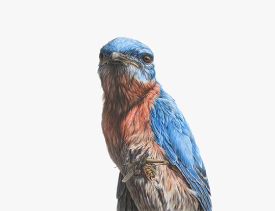 Bluebird, Ink on paper,38″X50″, 2009